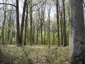 Bertranges forest